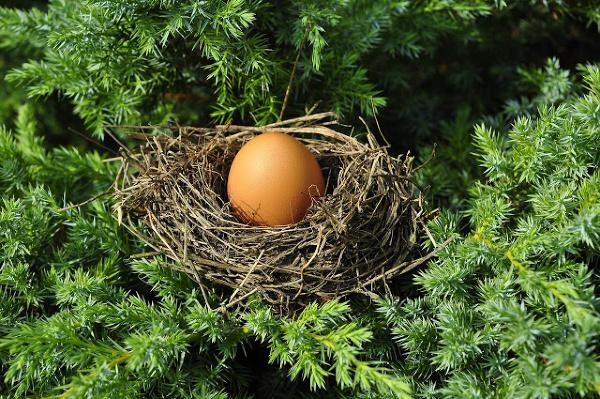 egg branch