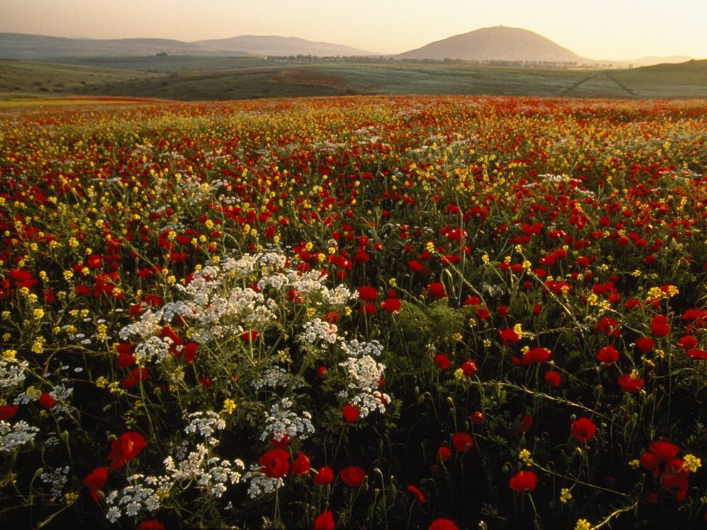 Jezreel Valley in Spring by Annie Griffiths