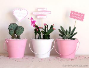 succulent planters for valentine's day
