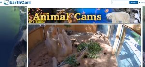animal live cams