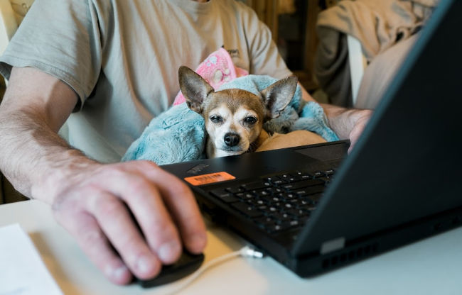 man working from home with a dog on his lap