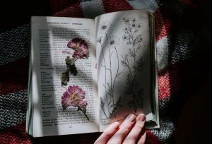 pressed flowers in a book