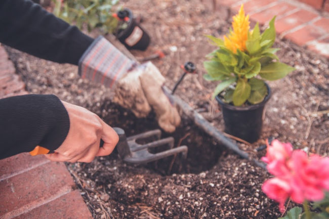hands using tools to garden flowers
