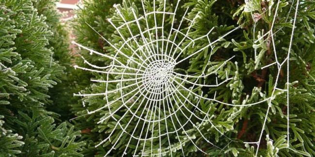 spider webs on christmas tree for a ukraine christmas traditions